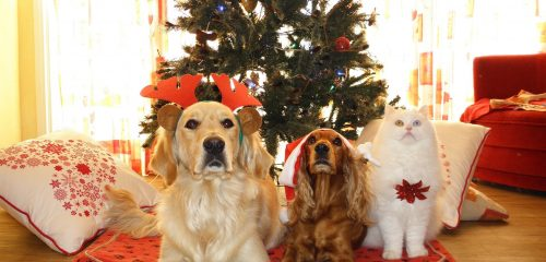 Two dogs and a cat in front of a Christmas Tree